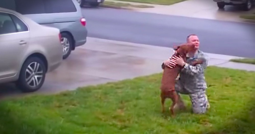 Pup Excitedly Welcomes Her Soldier Back Home--Aww!