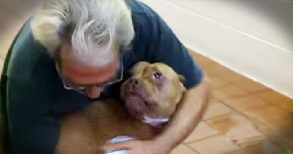Dog Swims Over a Mile During a Storm to Reunite With Owner