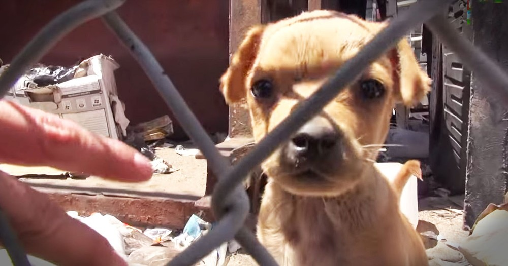Desperate Family Of Dogs Gets Precious Rescue