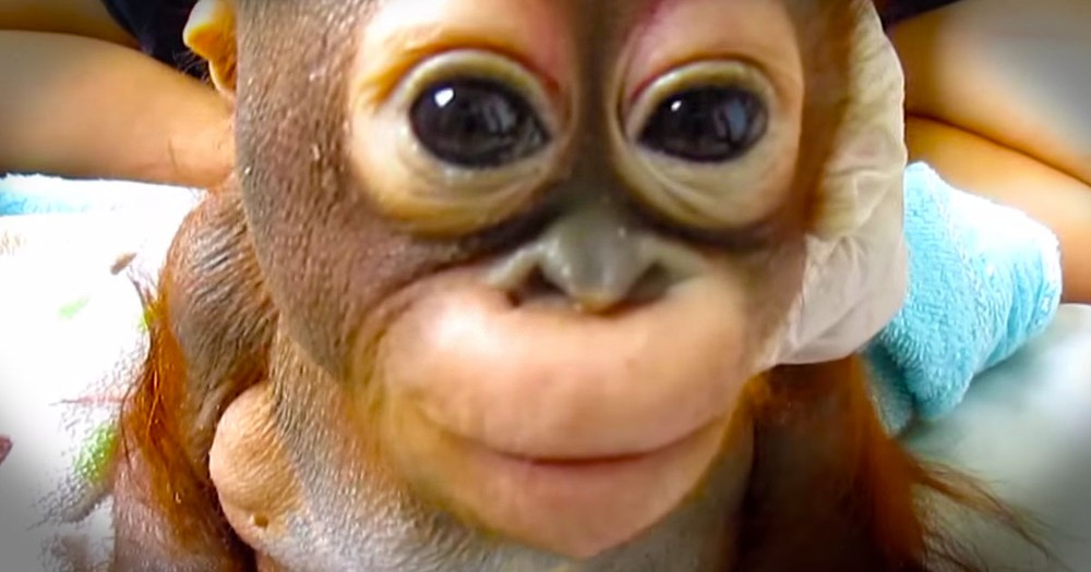 Here Is The Latest Heartwarming Update On Baby Budi