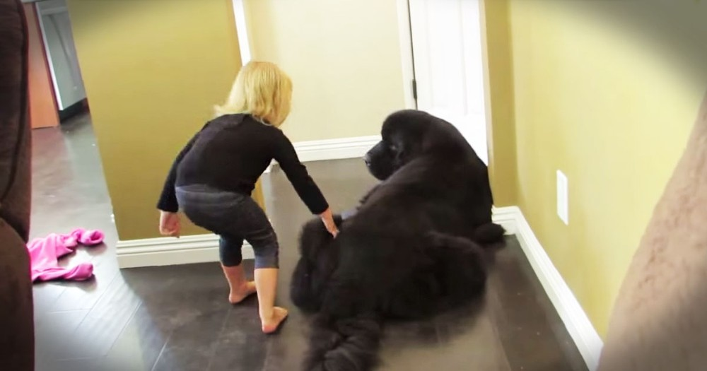 Pup Plays Cutest Game Of Tag With His Toddler Friend