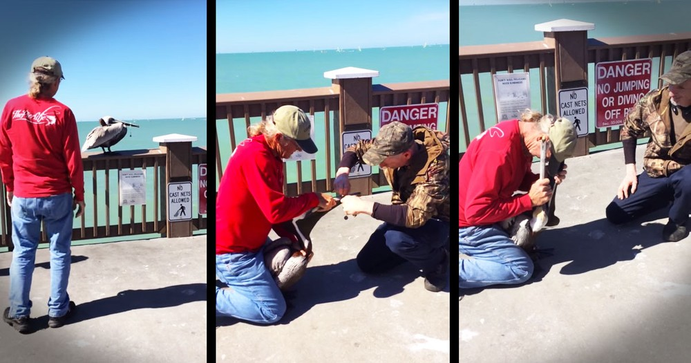 Man Bravely Does THIS To Rescue A Starving Pelican--WOW!