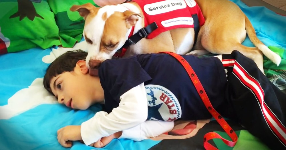 A School Banned This Service Dog Because It's A Pit Bull!