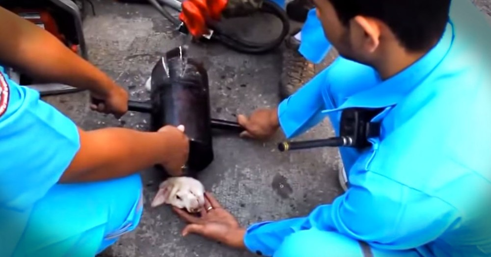 Heartwarming Rescue of a Poor Pup From An EXHAUST PIPE!