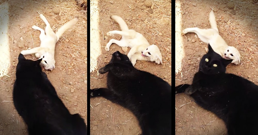 These 2 Unlikely BFFs Are About To Make Your Day!