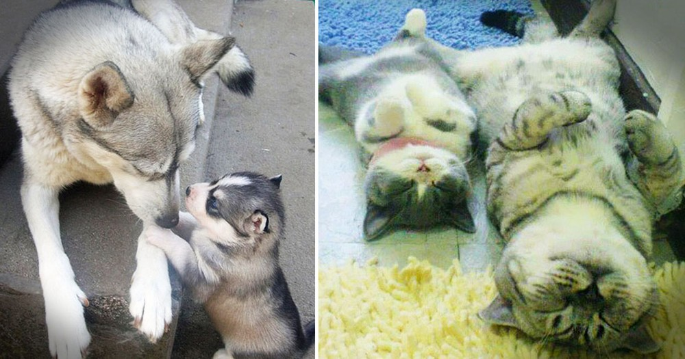 Animals Posing With Their Adorable 'Mini-Me' Twins Is Cuteness Overload!
