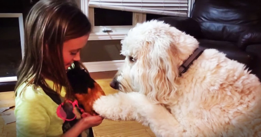 Apparently, This Gentle Pup Has A New BFF--Aww!