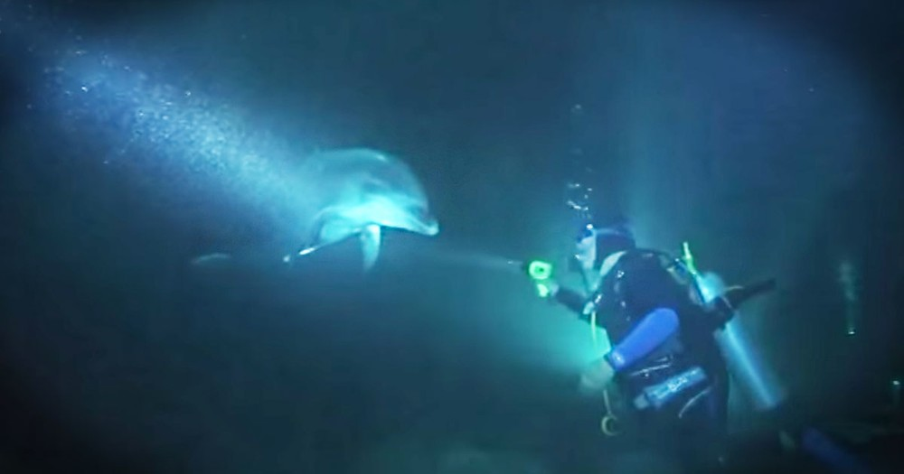 What Happened After This Dolphin Swam Up--AMAZING!