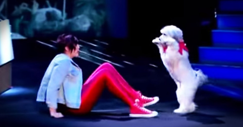 This Doggie Dance Audition THRILLED Me!