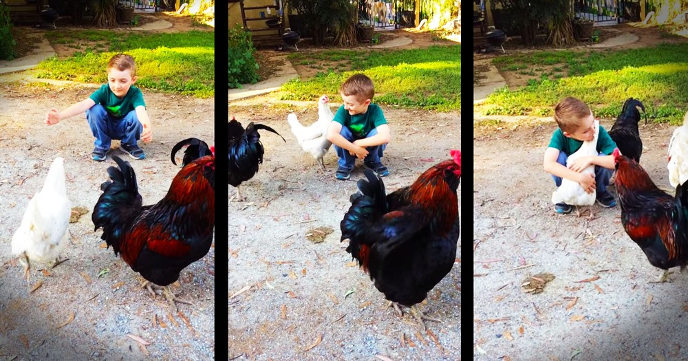 He Got A Haircut That Confused His Chicken BFF, But Then. . .HUGS!