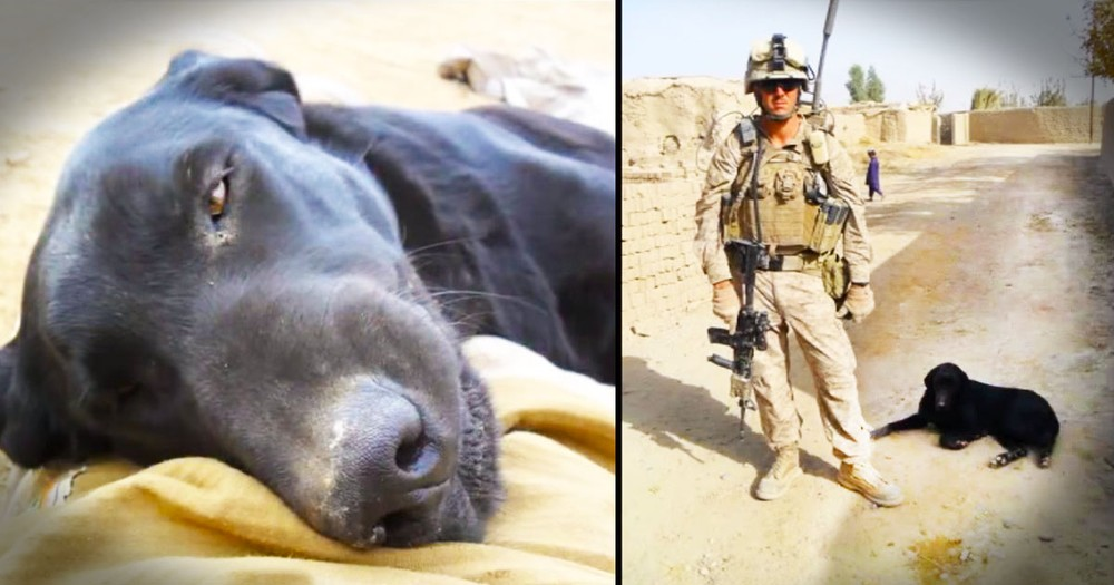 Community Comes Out To Support Military Pup's Final Ride
