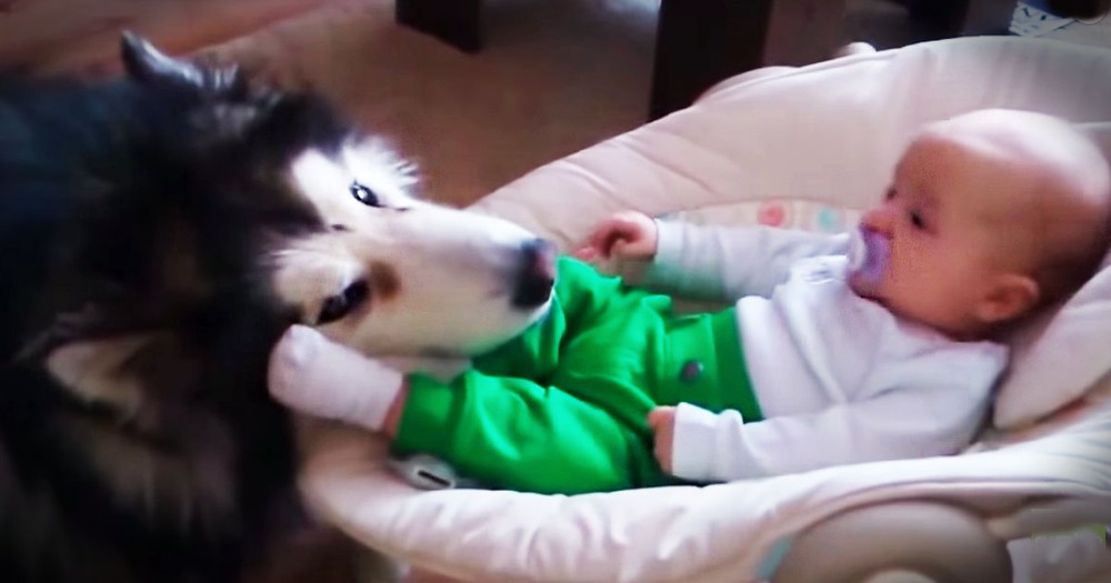 My Heart Puddled Over This Big Dog's Love For His Tiny Baby BFF