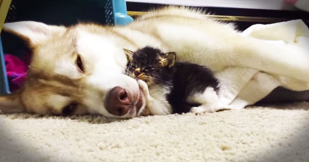 This Abandoned Kitten Has An Unlikely New Mommy--So SWEET!