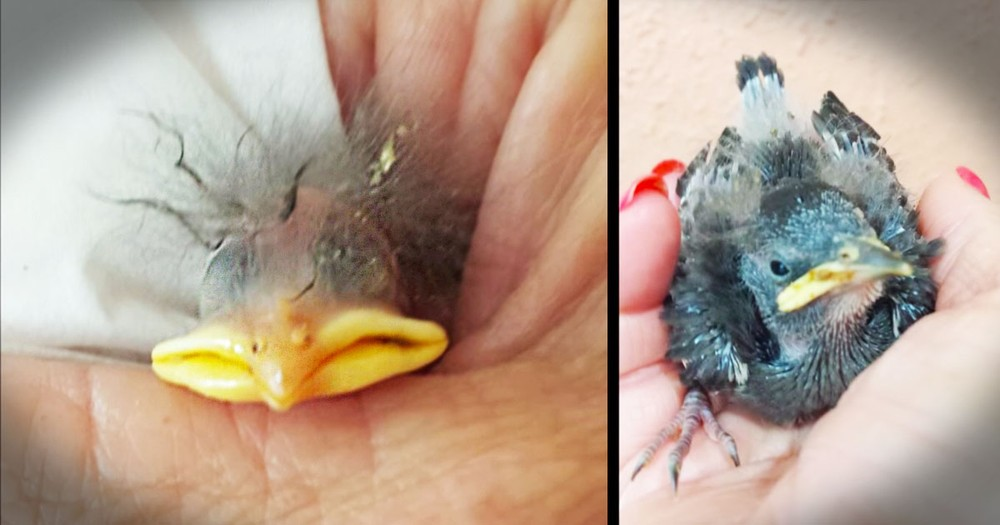 She Found A Cracked Egg On The Ground. What Happened Next--Awwww!