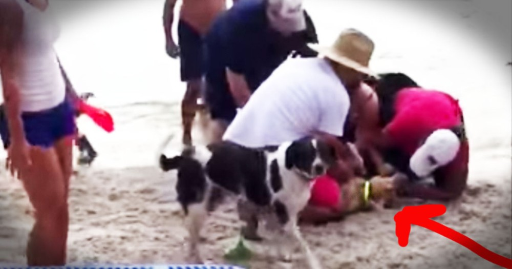 What They Did To Save This Poor Dog's Life...Heroic