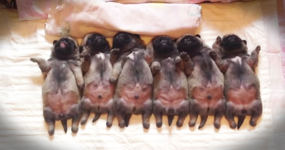 Bad Day? Here's A Line Of Sleepy Puppy Bellies To Fix It!