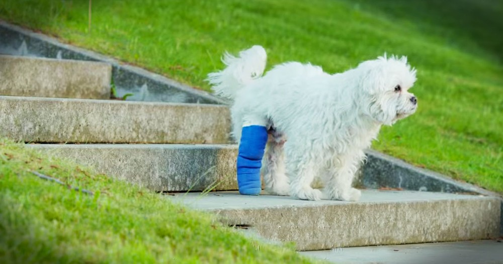 Poor Pup's Cast Was Holding Him Back. Until His Human Did THIS!