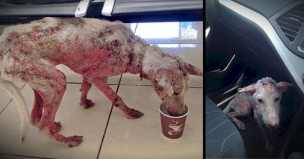 This Abandoned Dog Was Desperate. But Jumping Into This Car SAVED Her Life!