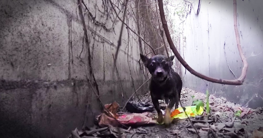 Scared Dog Living In A Trench Gets Beautiful Rescue