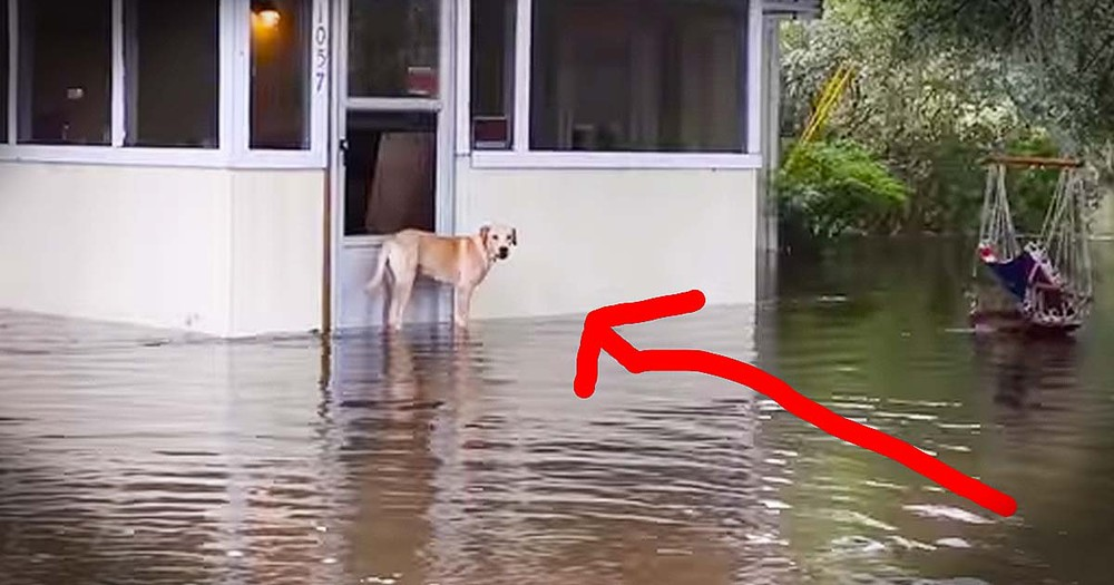 Dog Rescued From Rising Flood Waters Gets Happy Ending