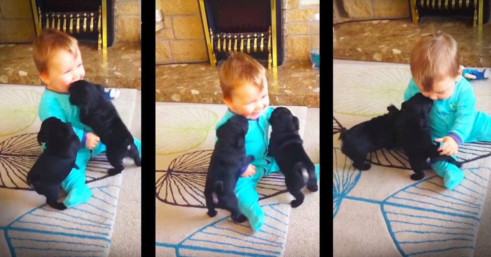 Baby Louie And Puppy Best Friends Will Make Your Day!