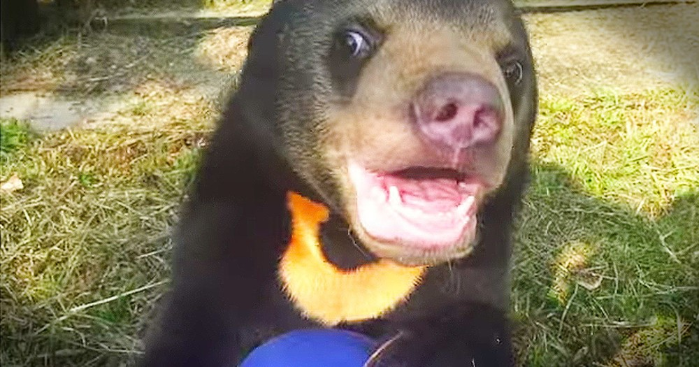 Orphaned Bear Cub Sees A Play Area For The First Time - TEARS!