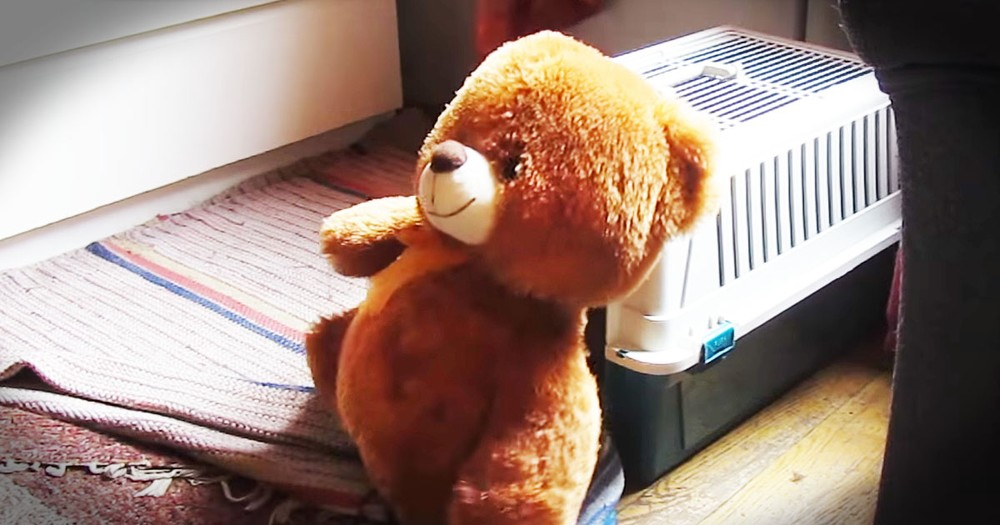 Determined Pup Hilariously Gets Big Teddy Bear Into His Crate