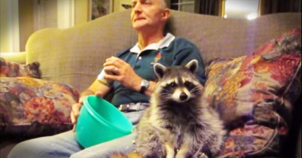 Tribute To This Late Raccoon Is Touching
