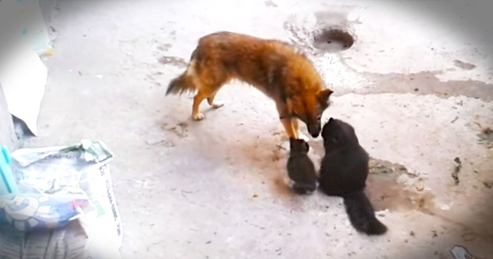 Cat Takes Her Kittens To Meet An Old Friend...And It's Precious