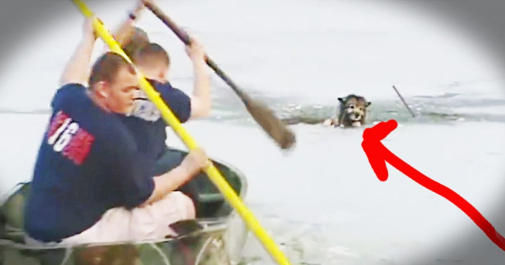 Dog's Icy Rescue Had Me All Nervous