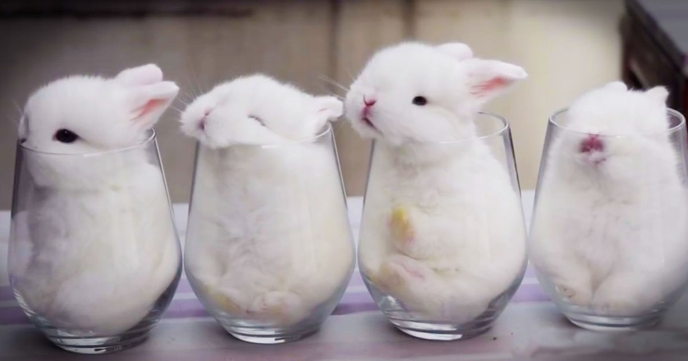 4 Sleepy Bunnies In 4 Tiny Glasses Made My Day