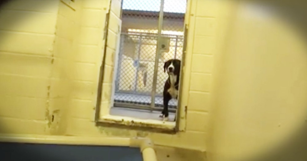 This Pup's Reaction When He Realizes He's Getting Adopted...Precious