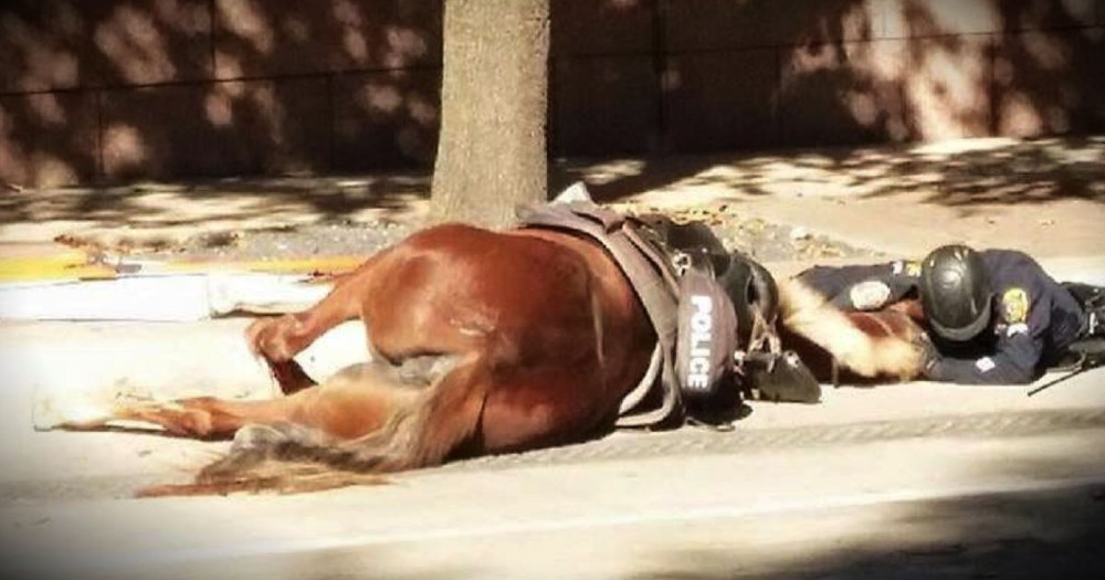A Powerful Photo Of An Officer Comforting A Dying Horse Goes Viral
