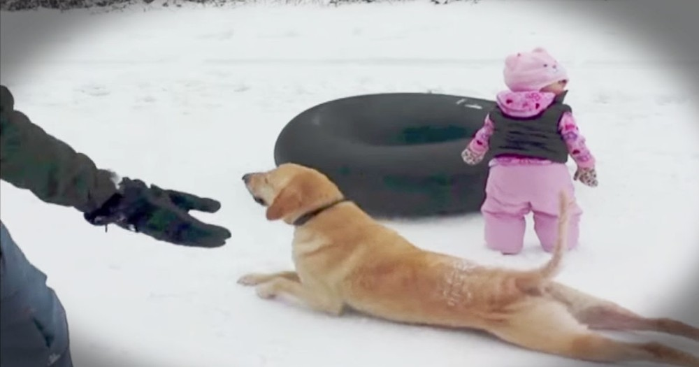 Dog's Snowy Silliness Had Everyone Cracking Up
