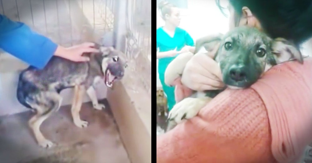Severely Abused Dog Cries As She Learns What Love Is