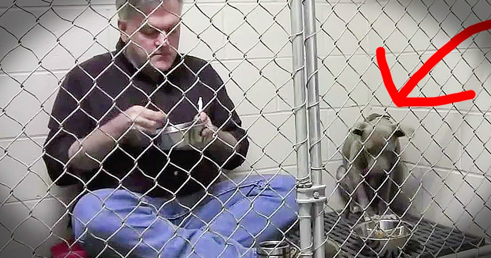 Vet's Kindness For A Starving Dog Will Move You