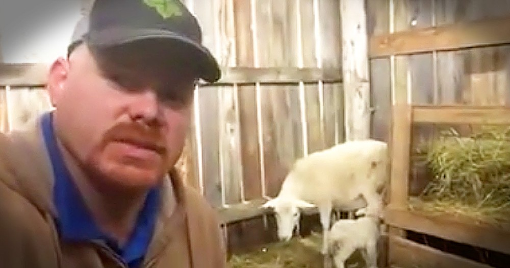 Farmer's Lesson On Rejection Inspired By Sheep Is Eye-Opening