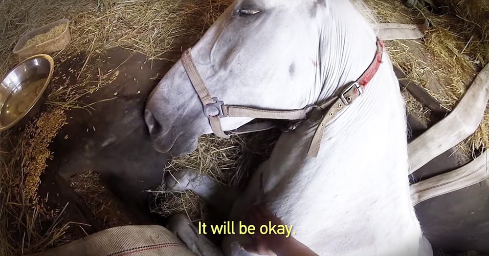 Horse Trapped In Maintenance Pit Gets Amazing Rescue