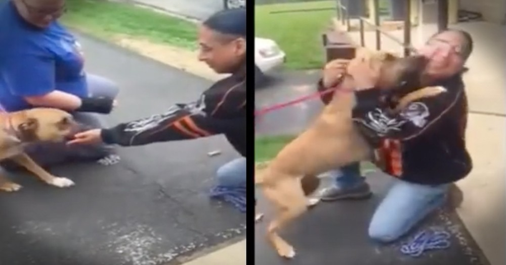 Dog's Reunion With His Human After 2 Years Is Powerful