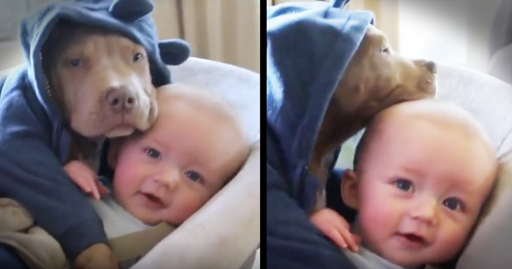Baby And Puppy's Cuddle Is Too Cute