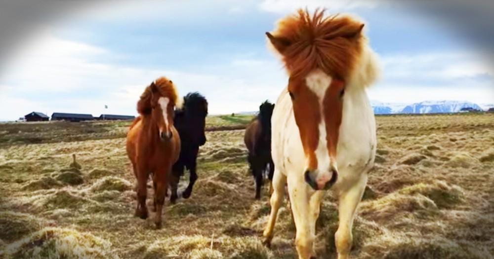 Surprisingly Friendly Horses Wow Photographer