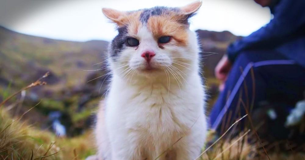 Blind Cat Goes On Big Adventure