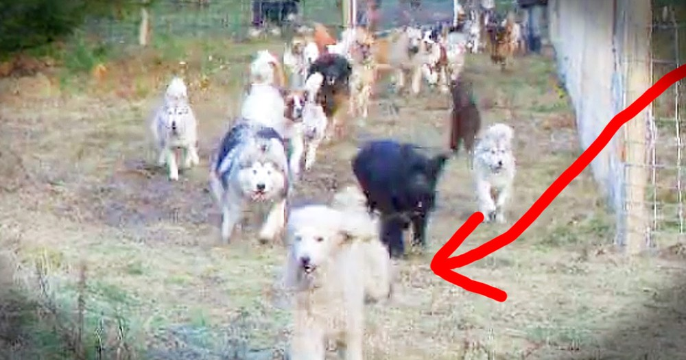 Rescue Dogs Have Sweetest Reaction To Their New Play Space