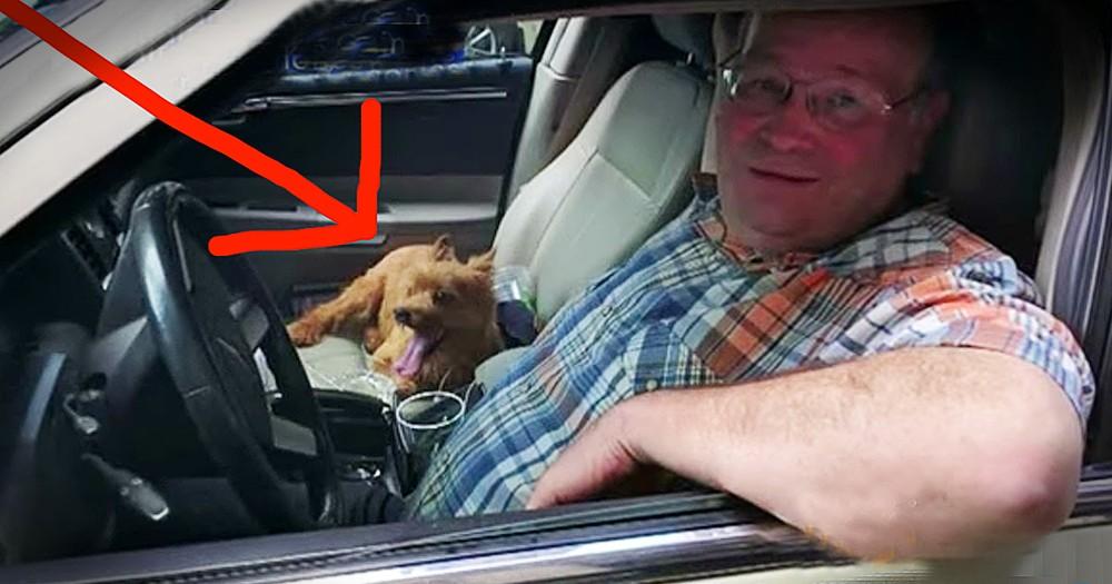 Dog's Dangerous Bridge Rescue Has Adorable Ending