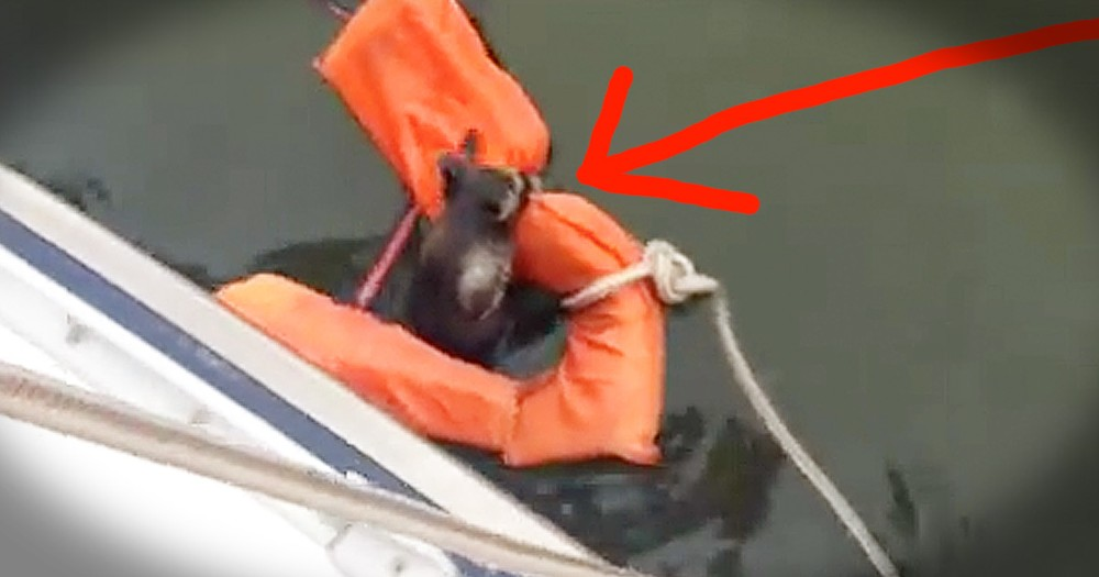 Raccoon Gets Amazing Rescue From Quick-Thinking Crew On Boat