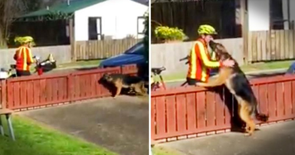 Mailman's Daily Dog Break Will Make You Smile