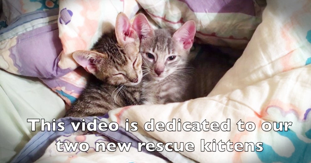 Couple's Adele Parody For Pet Lovers With Their Rescue Kittens Is Too Cute