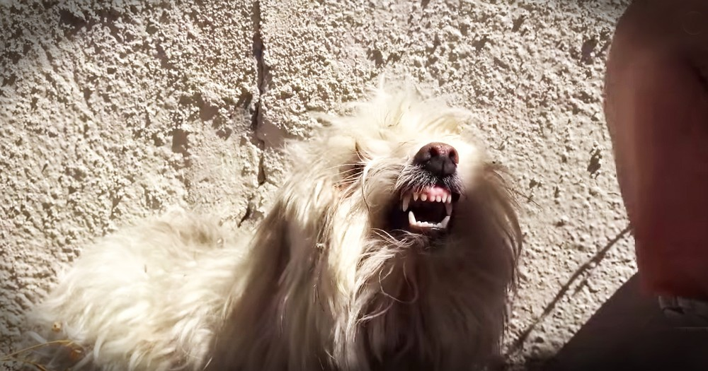 Terrified Pup Fought His Rescuers With All His Strength Until He Finally Felt Safe