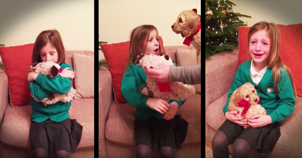 Parents Trade Their Daughter's Favorite Teddy For A Real Dog