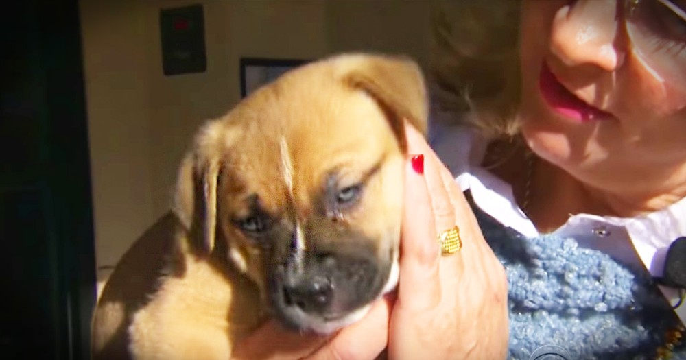Woman Helps Hundreds Of Dogs Find Homes In Just One Month